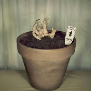 Zombie plant from Pinterest