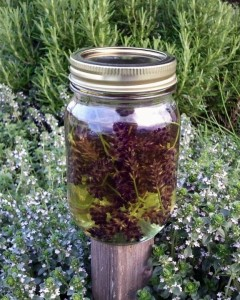 Lavender steeping in oil. My Lemon Yhyme and Rosemary are in the background
